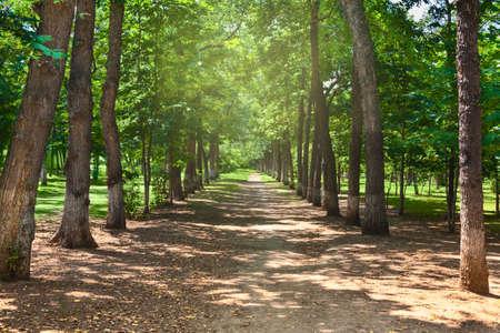 park allee summer trees