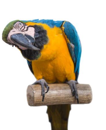 parrot  bird  animal  Stock Photo