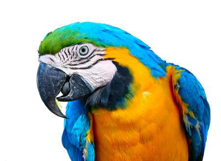 potrait: potrait of a parrot