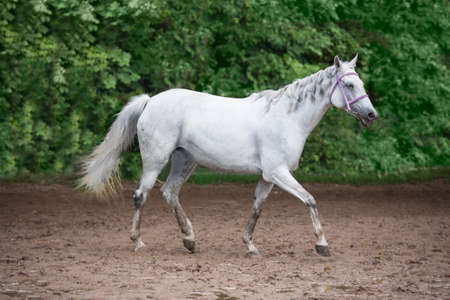 white horse nature animal Stock Photo