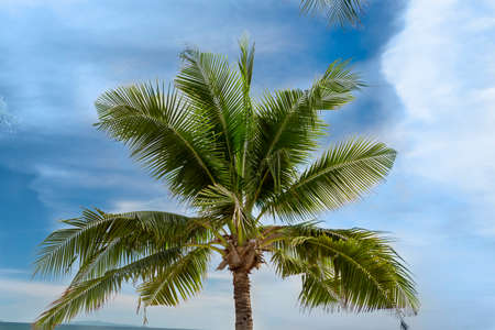 nature palm tree tropical sky