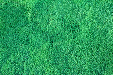 grass macro lawn green meadow field Stock Photo