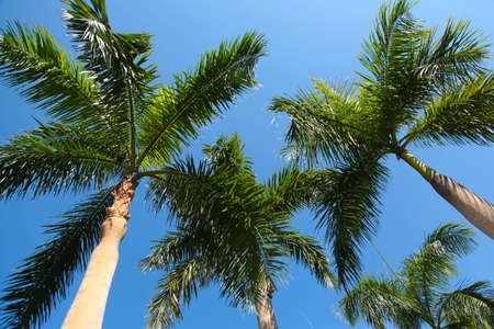 Relaxing palm tree sky