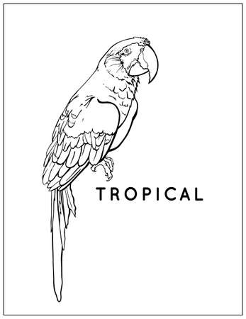 Black and white parrot. Vector tropical bird. Colouring book page. Scarlet Macaw, Ara Macaw red-large, Ara chloropterus. WIldlife animal. Vector illustration. EPS10
