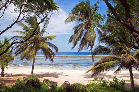 Beach in Kenya, Tiwi Beach