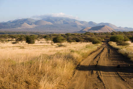 Typical Landscape in Tsavo National Park, Kenya photo
