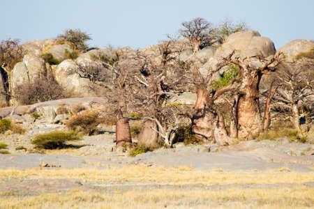 botswana: Kubu Island in Botswana