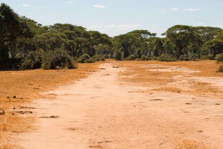 Hunters Road next to Hwange National Park, Botswana
