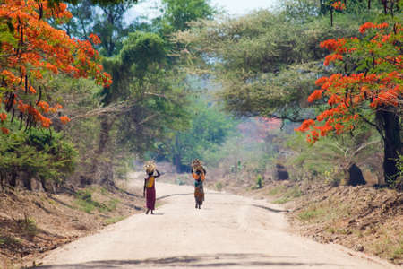 African women walking along Jacaranda alley in remote Africa