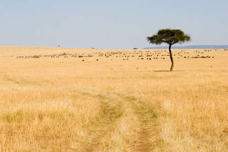 Wide Savannah in Masai Mara National Reserve, Kenya photo