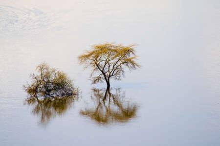 nakuru: View of trees in Lake Nakuru National Park, Kenya