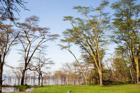 rift: View at Lake Nakuru National Park, Kenya