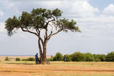 Acacia tree in Masai Mara National park, Kenya