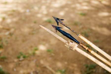 extinction: Different poisoned arrows used for hunting by the Hadzabe tribe. Hadzabe tribe threatened by extinction. Editorial