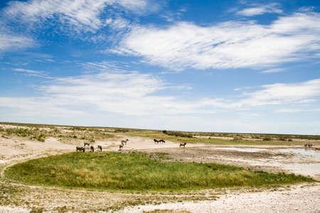 Beautiful landscape in Etosha National Park, Namibia Stock Photo