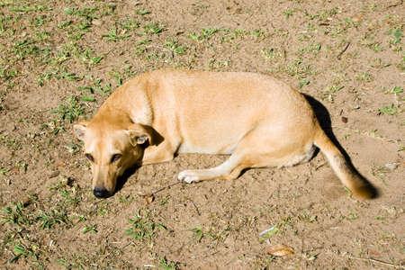 Friendly mixed breed dog.