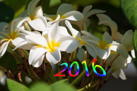 Happy new 2016 year. Colorful design with blossoms.