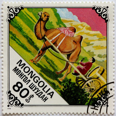 camel post: MONGOLIA - CIRCA 1978: A Postage Stamp Printed in the Mongolia Shows Man Driving of a Harnessed Camel, circa 1978 Stock Photo