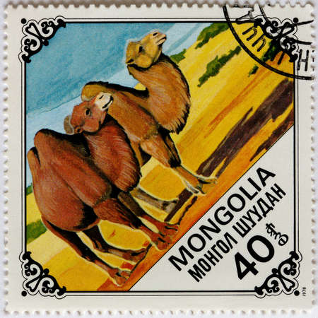 camel post: MONGOLIA - CIRCA 1978: A Postage Stamp Printed in the Mongolia Shows Bactrian Camel, circa 1978
