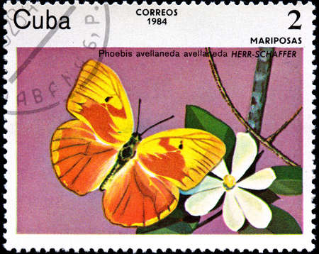 cuba butterfly: CUBA - CIRCA 1984:A Postage Stamp Shows Phoebis Avellaneda with a Butterfly, circa 1984 Stock Photo