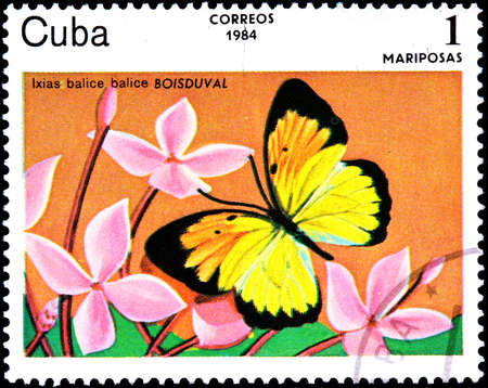 cuba butterfly: CUBA - CIRCA 1984:A Postage Stamp Shows Ixias Balice with a Butterfly, circa 1984
