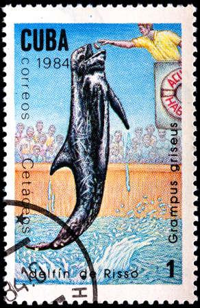 grampus: CUBA - CIRCA 1984:A Postage Stamp Shows Grampus Griseus, circa 1984  Stock Photo