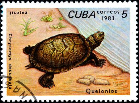 sea mark: CUBA - CIRCA 1983:A Postage Stamp Shows Chrysemys Decussata, circa 1983 Stock Photo