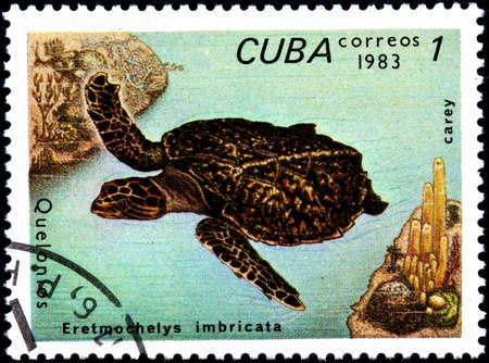 sea mark: CUBA - CIRCA 1983:A Postage Stamp Shows Eretmochelys Imbricata, circa 1983