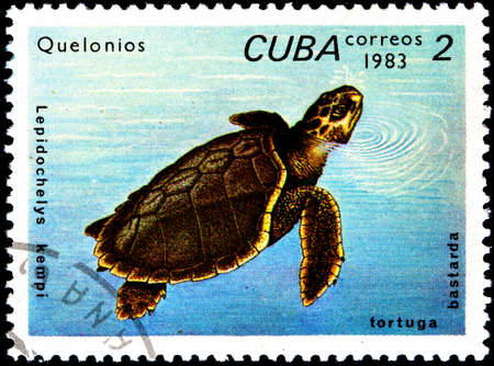 sea mark: CUBA - CIRCA 1983:A Postage Stamp Shows Lepidochelys Kempi, circa 1983
