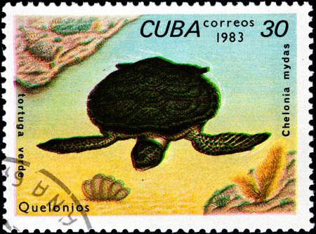 circa: CUBA - CIRCA 1983:A Postage Stamp Shows Chelonia Mydas, circa 1983 Stock Photo