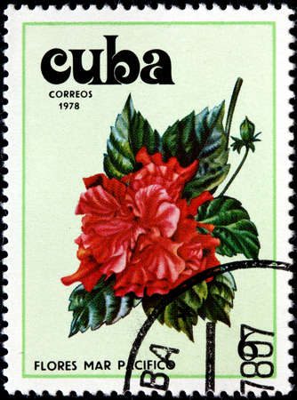 caribbean climate: CUBA - CIRCA 1978 A Postage Stamp Shows Flowers of the Pacific Ocean, circa 1978