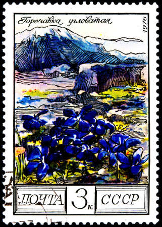philatelic: USSR - CIRCA 1976  A Postage Stamp Shows Image of a Gentiana Flower with the Designation  Gentiana Verna , circa 1976 Stock Photo