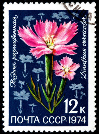 USSR - CIRCA 1974: A Postage Stamp Shows Dianthus Versicolor, circa 1974