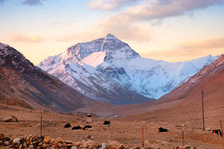 Yaks in the Tibetan plateau in a brown valley surrounding Mount Everest, against a warm colorful morning sky.