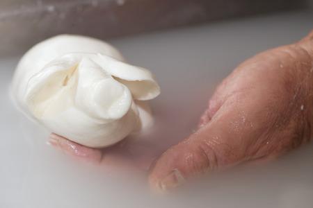preparation of mozzarella in a diary