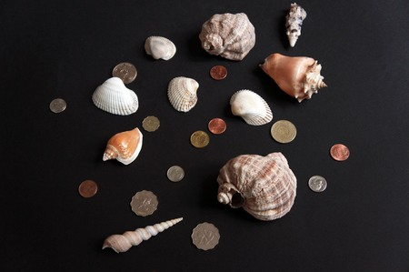 copper coin: Shells and Coins