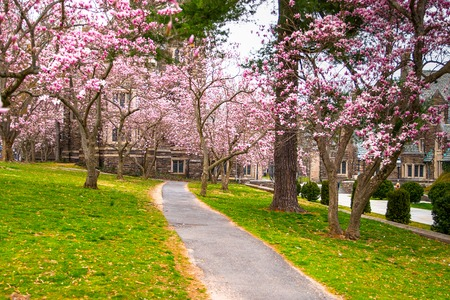 Garden in blossom in Princeton NJ. Spring in Princeton village. Famous university Princeton Plainsboro.