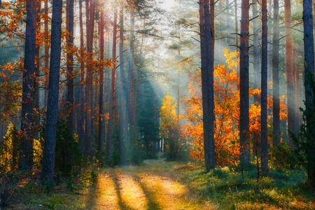 Autumn. Autumn forest. Forest landscape. Fall nature. Sunlight in forest. Sunbeams shining through trees. Path in natural park with fall trees. Imagens