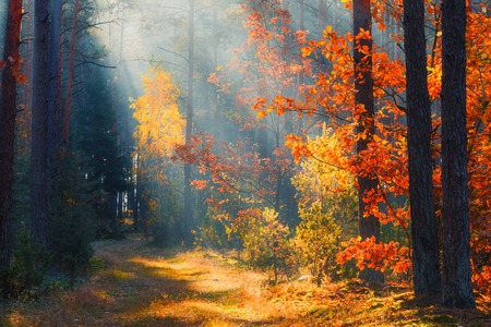 Fall landscape. Autumn background. Forest sunlight. Autumn nature. Trees with colorful leaves in forest. Fall morning in picturesque forest.