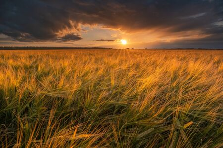Sunset over field. Agriculture. Harvesting. Barley field in the evening. Autumn landscape with colorful evening sky. Standard-Bild