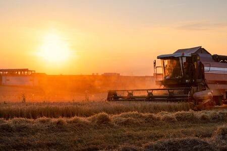 Combine harvester working in field at the sunset. Rural scenery. Industrial landscape. Harvesting time. Standard-Bild