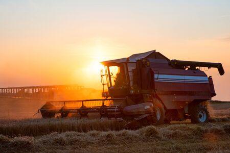 Harvester in wheat field on sunset yellow sky background. Idyllic rural landscape. Industrial scenery. Machinery harvesting. Standard-Bild