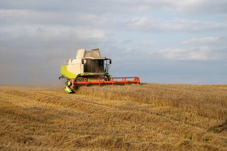 Harvesting wheat. Combine harvester in agricultural field. Rural landscape. Farm industry.