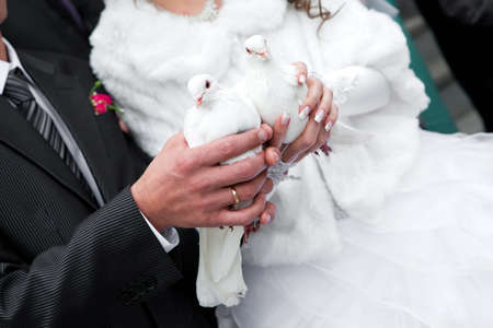 Wedding pigeons in hands of the groom and the bride  Stock Photo - 11541752