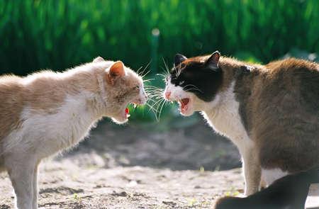Fighting cats photo