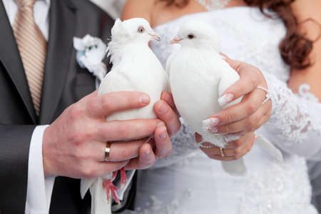 Wedding pigeons in hands of the groom and the bride  Stock Photo - 11878407
