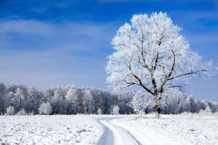 Trees covered with snow against the sky Stock Photo - 12115536