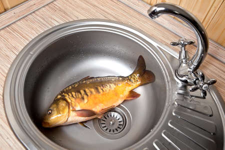 Fresh fish In a kitchen sink Stock Photo - 12854770