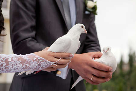 Wedding pigeons in hands of the groom and the bride  photo