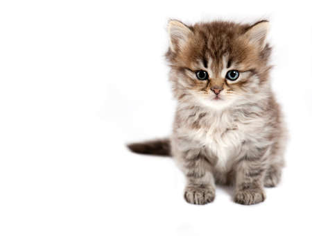 The small cat is isolated on a white background  photo